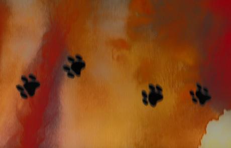 visual_arts_desert_dingo_donna_stone